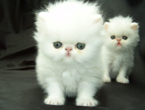 Top 10 Cutest Animals In The World страница 10 Info Incrediblexyz